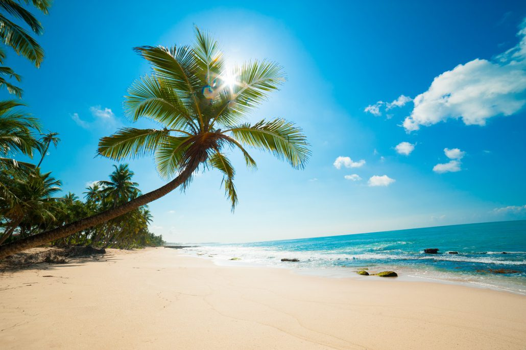 14 Days Tour Negombo Beach