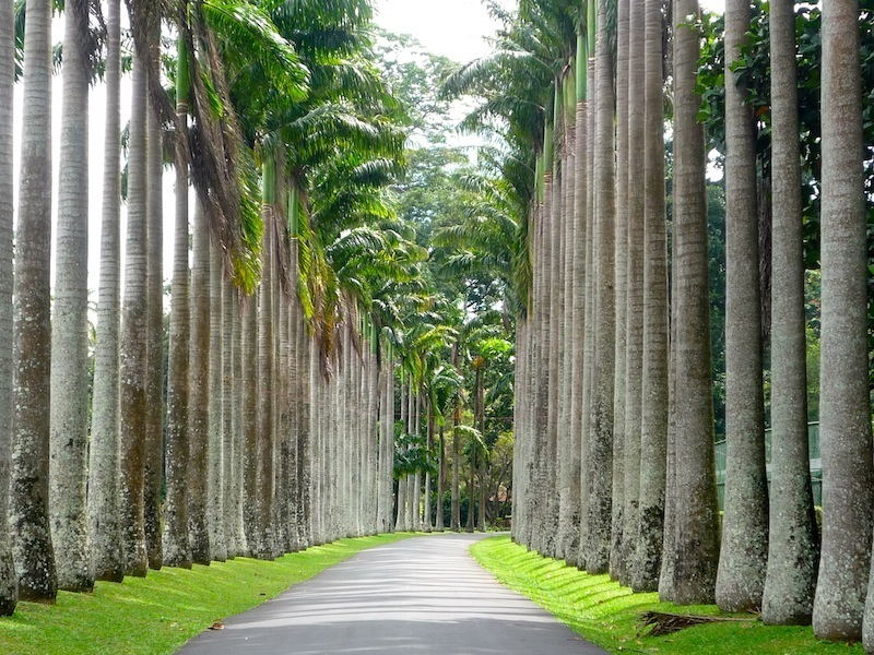 2 Weeks Tour Peradeniya Garden Palm Avenue