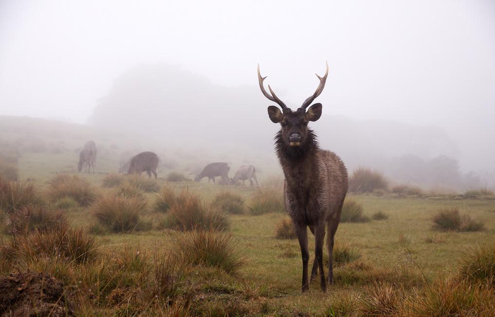 14 Days to Sri Lanka Horton Plains Sambadeer