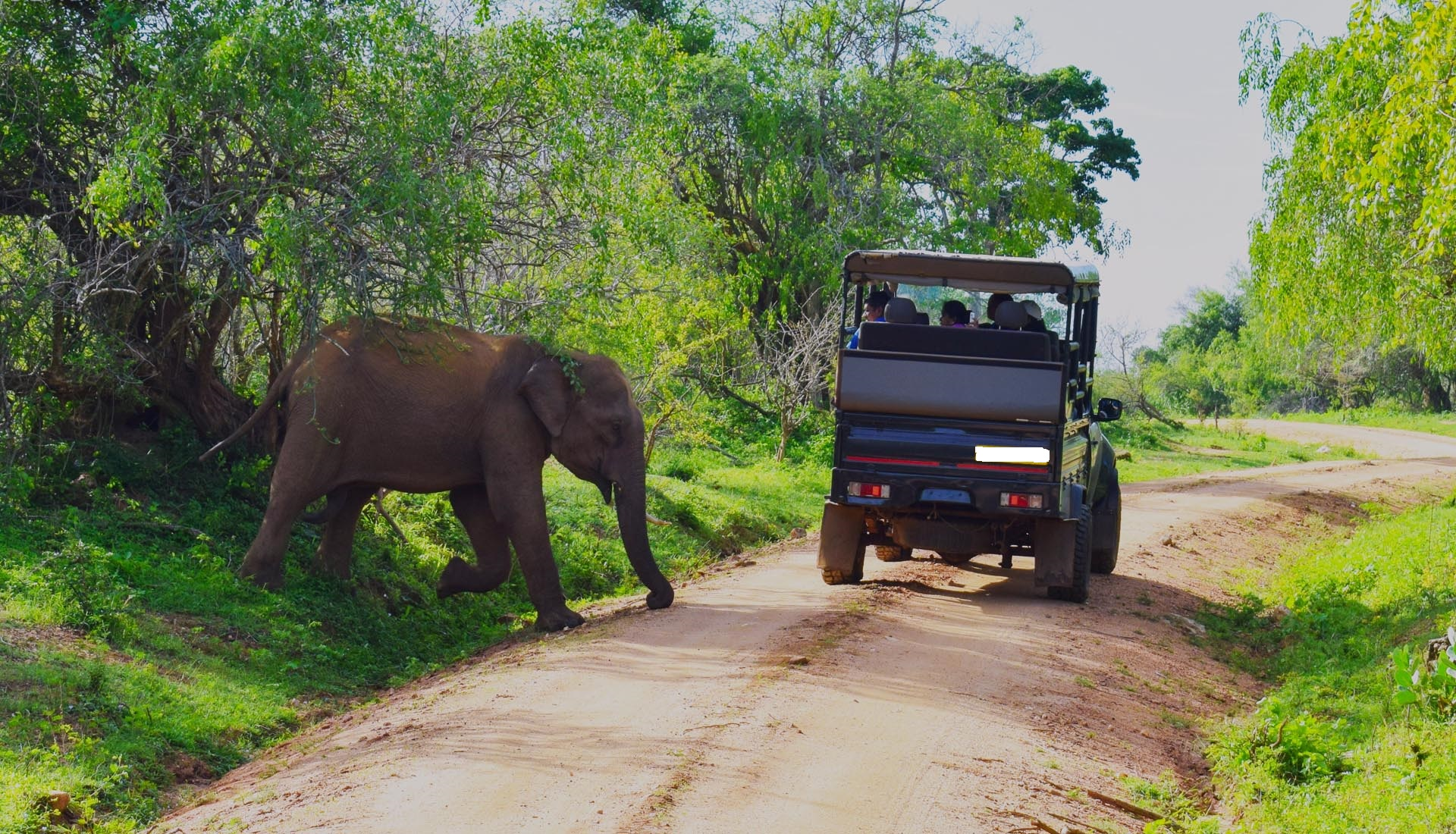 2 Weeks Holidays Itinerary Yala Safari