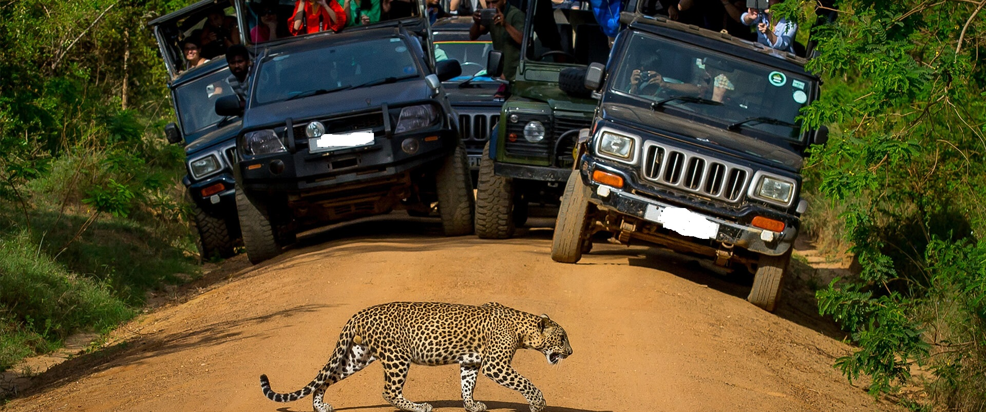 2 Weeks Tour Itinerary Safari Jeeps Yala
