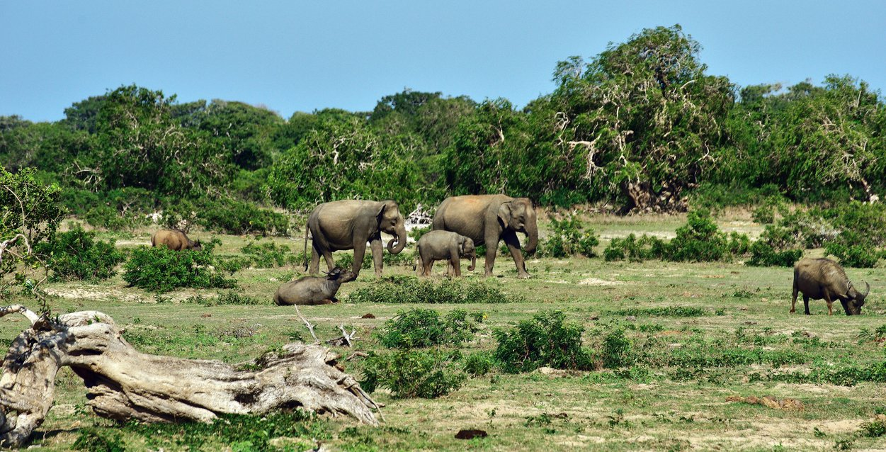14 Days to Sri Lanka Yala National Park