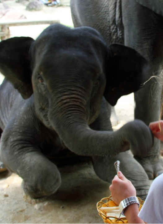 2 Weeks Holidays Elephant Feeding