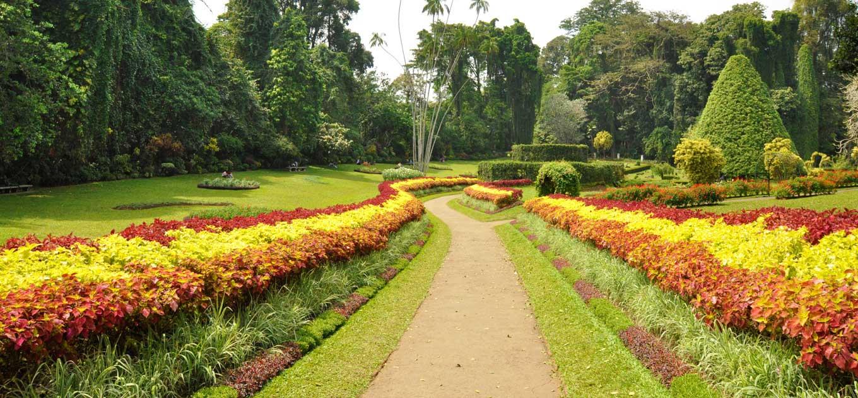 2 Weeks Sri Lanka Peradeniya Garden